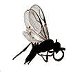 Host-Dryinidae (Hymenoptera) interactions ...