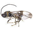 A new genus from Vietnam (Hymenoptera, ...