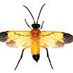 A new genus and three new species of ...