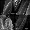 Evolution of glandular structures on ...