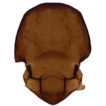 Additional data on Aphidiinae (Hymenoptera, ...