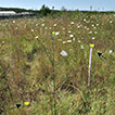 Pan traps and bee body size in unmanaged urban habitats