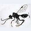 A new species of <i>Aulacus</i> (Hymenoptera, Aulacidae) from Hokkaido, Japan